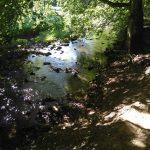Bach am Nohner Wasserfall