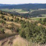 Landschaft in der Vulkaneifel Nähe Ferienwohnung Alte Scheune