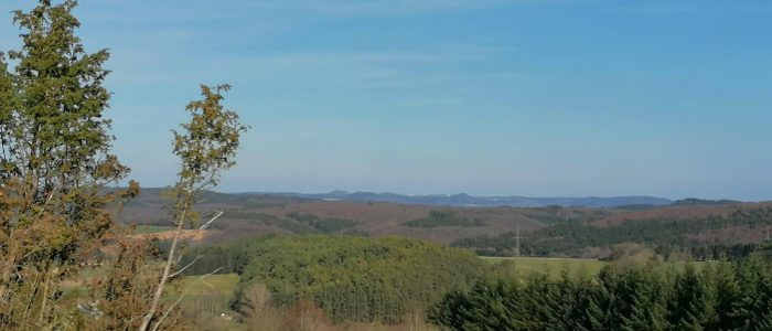 Natur in der Vulkaneifel mit Wald