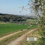Blick auf Niederehe in der Vulkaneifel in Rheinland Pfalz